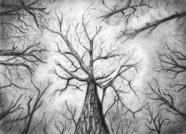 Wall Art - Drawing - Winter Canopy by Robin Miller