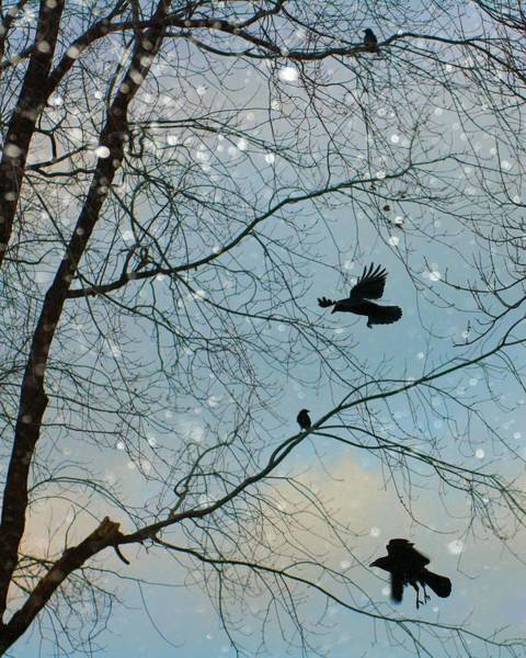 Wall Art - Photograph - Winter Crows  by Gothicrow Images