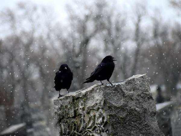 Wall Art - Photograph - Winter Crows On Tombstone by Gothicrow Images