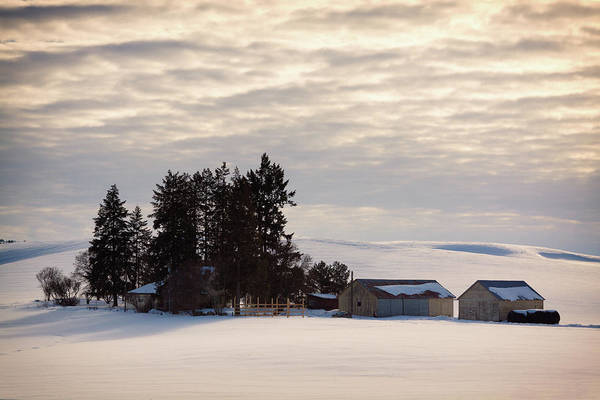 Photograph - Winter Farm At Golden Hour by Tatiana Travelways