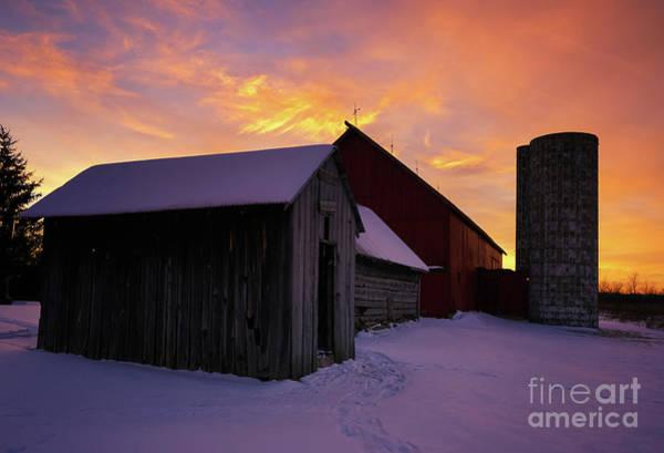 Photograph - Winter Farm Chores by Rachel Cohen