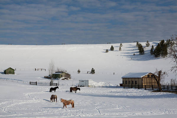 Photograph - Winter Farm Washington by Tatiana Travelways