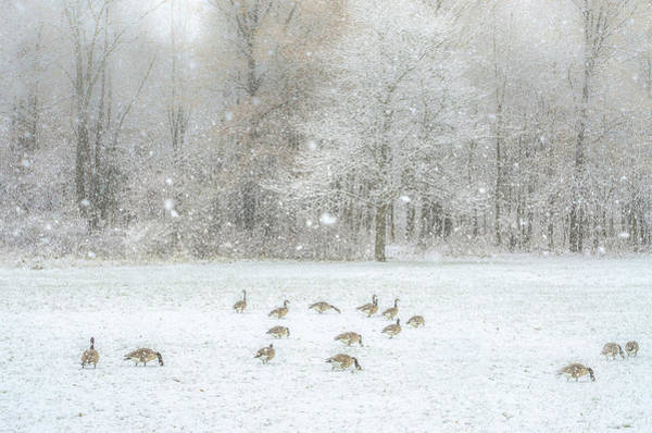 Photograph - Winter Food Hunt by Julie Palencia