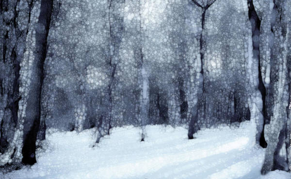 Wall Art - Painting - Winter Forest Black And White by Jack Zulli