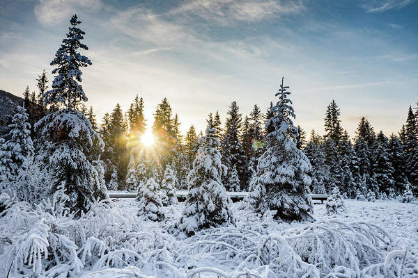 Photograph - Winter Forest by Framing Places