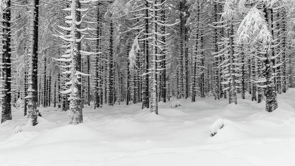 Photograph - winter forest, Harz by Andreas Levi