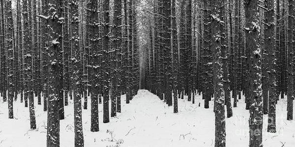 Wall Art - Photograph - Winter Forest In Black And White by Twenty Two North Photography