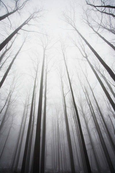 Wall Art - Photograph - Winter Forest In Mist by Nine Ok