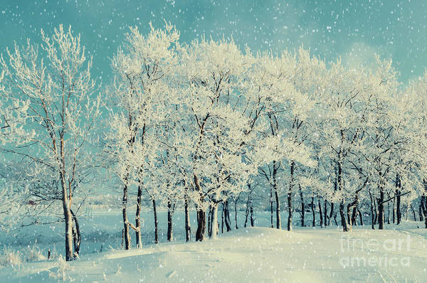 Wall Art - Photograph - Winter Forest Landscape With Snowy by Marina Zezelina