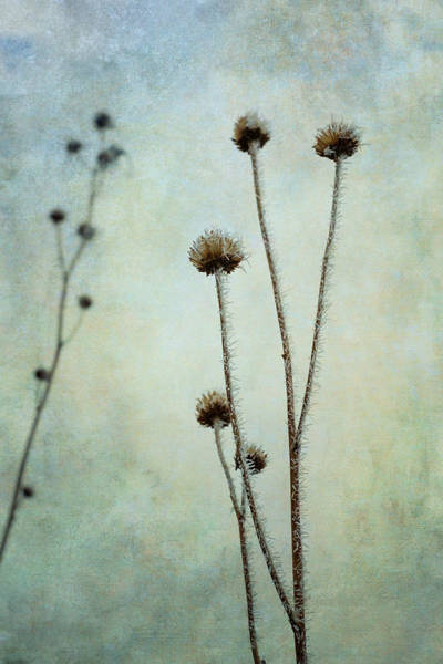 Photograph - Winter Frost  by Mary Lee Dereske