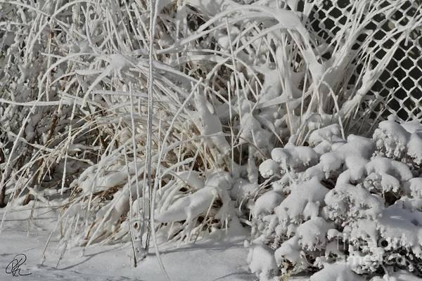 Photograph - Winter Garden by Ann E Robson