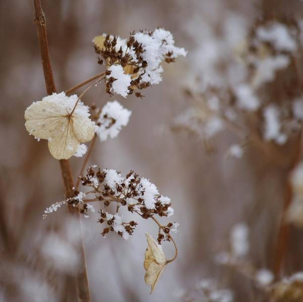 Quebec Photograph - Winter Garden by Marie-josée Lévesque