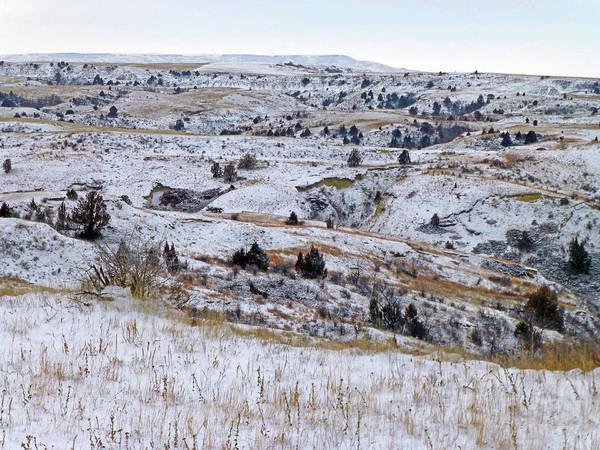 Photograph - Winter Grassland Wonderland by Cris Fulton