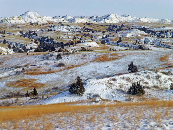 Photograph - Winter Grasslands by Cris Fulton