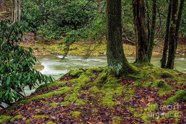 Photograph - Winter Greens On Back Fork  by Thomas R Fletcher