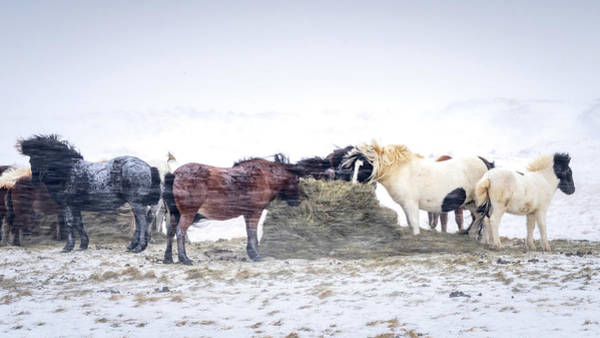 Photograph - Winter Horses by Framing Places