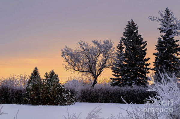 Evening Wall Art - Photograph - Winter In Pink Color by Viktor Birkus