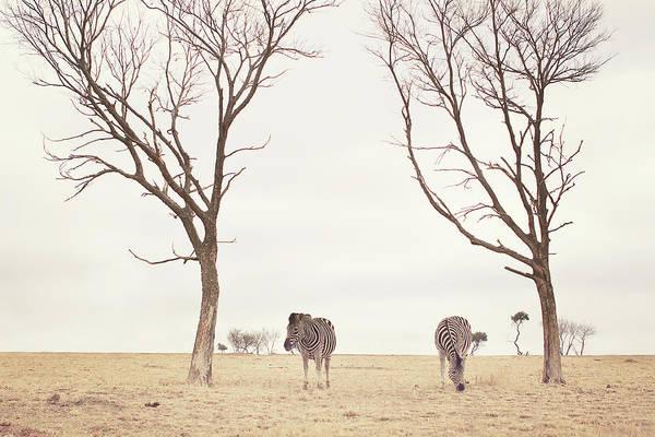 Johannesburg Wall Art - Photograph - Winter In Safariland by Photo By Anna Theodora