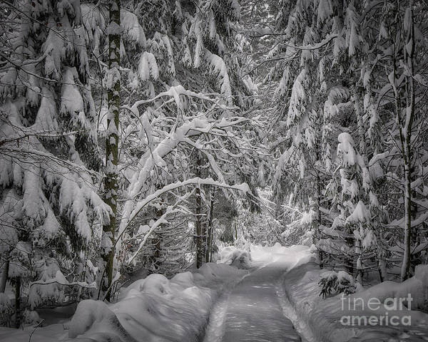 Photograph - Winter In The Forest by Edmund Nagele