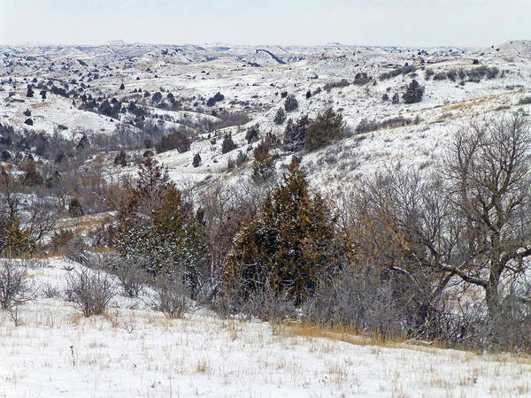 Photograph - Winter In The Hills Of West Dakota by Cris Fulton