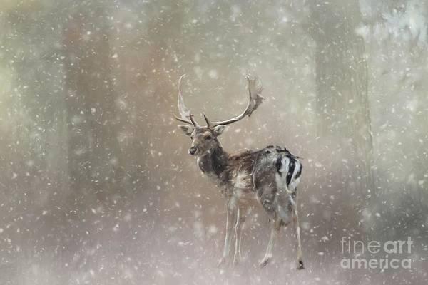 Winter In The Woods Art Print