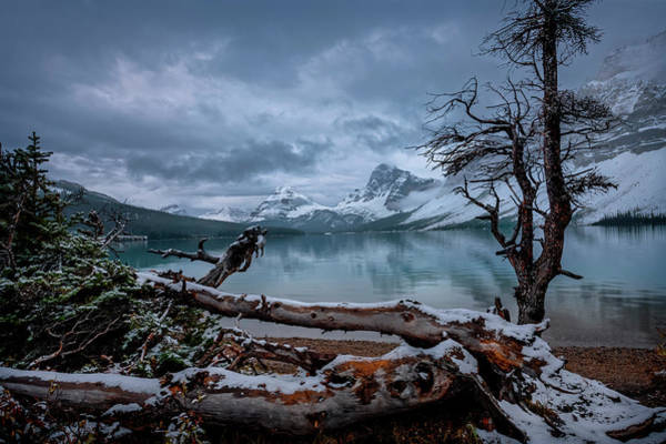 Photograph - Winter Is Coming Bow Lake by Dan Jurak