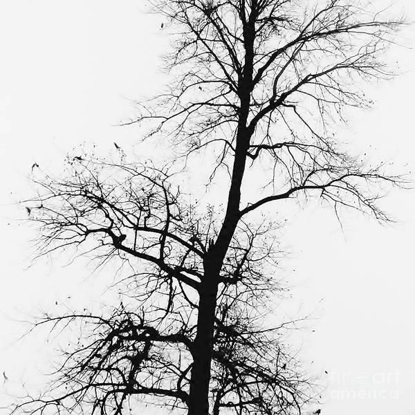Photograph - Winter by Jeni Gray
