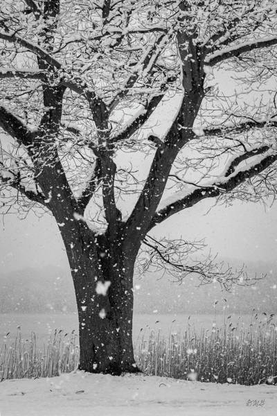 Photograph - Winter Landscape Ix Bw by David Gordon