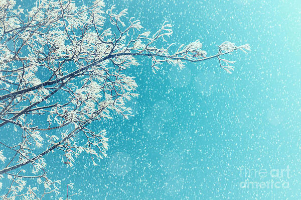 Wall Art - Photograph - Winter Landscape Of Snowy Tree Branches by Marina Zezelina