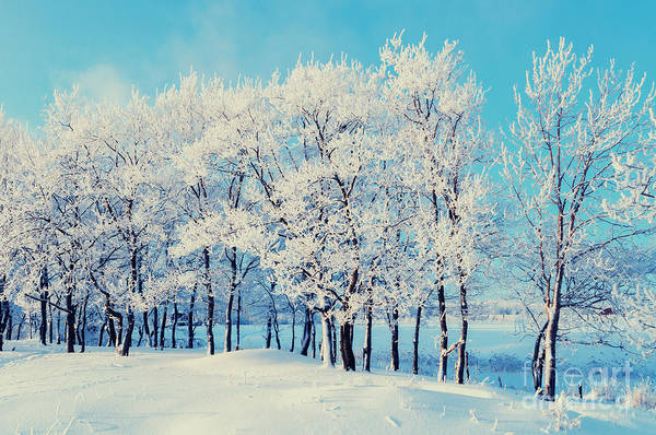 Wall Art - Photograph - Winter Landscape - Snowy Beautiful by Marina Zezelina
