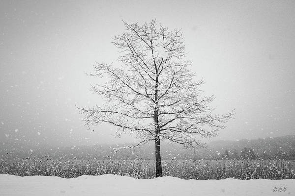 Photograph - Winter Landscape Vii Bw by David Gordon