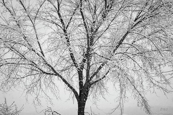 Photograph - Winter Landscape Viii Bw by David Gordon