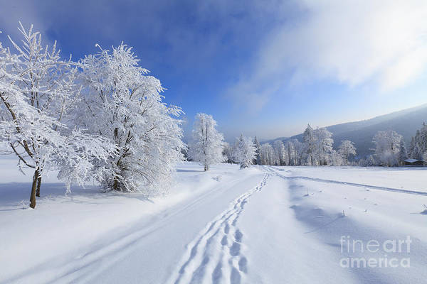 New Years Day Photograph - Winter Landscape With Snow by Bas Meelker