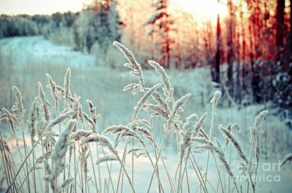 Snowflakes Photograph - Winter Landscape.winter Scene by Fanfo