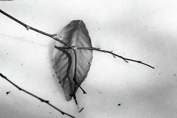 Wall Art - Photograph - Winter Leaves by Susan Capuano