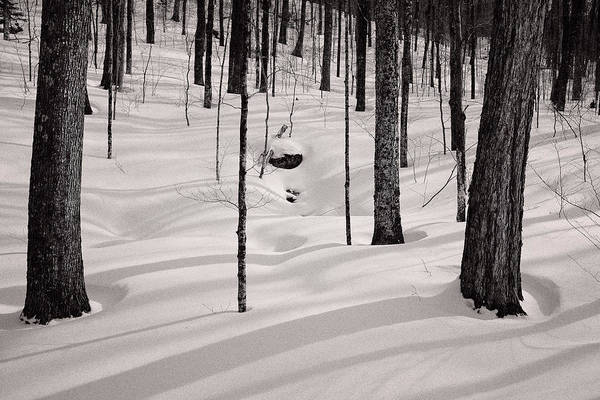 Photograph - Winter Light In The Forest by Jeff Sinon