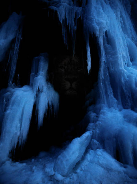 Wall Art - Photograph - Winter Lions Den by Pelo Blanco Photo