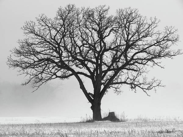 Photograph - Winter Majestic by Wild Thing