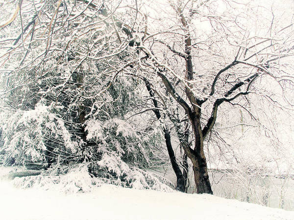 Photograph - Winter Marches On by Jessica Jenney