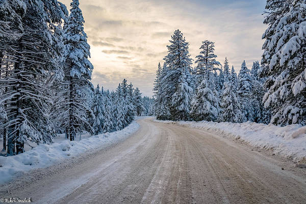 Photograph - Winter by Mike Ronnebeck
