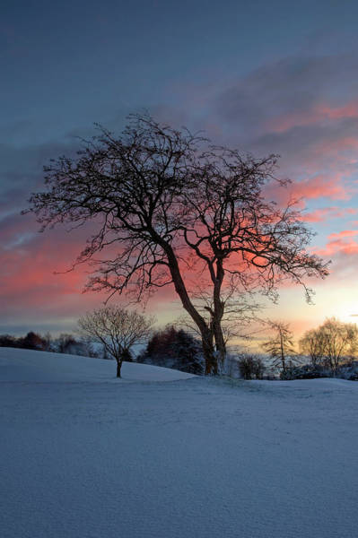 Wall Art - Photograph - Winter Morning by Alan Cosh