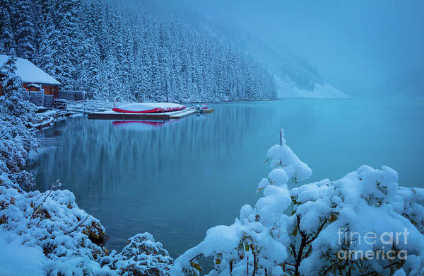 Wall Art - Photograph - Winter Morning At Lake Louise by Inge Johnsson