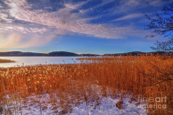 Wall Art - Photograph - Winter Morning Light 3 by Veikko Suikkanen
