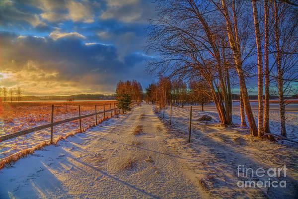 Birch Photograph - Winter Morning Light 6 by Veikko Suikkanen