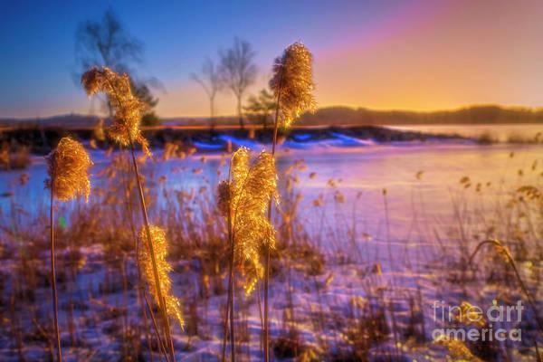 Wall Art - Photograph - Winter Morning Light by Veikko Suikkanen