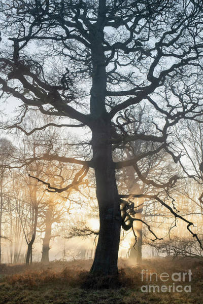 Wall Art - Photograph - Winter Oak Mist And Sunrays by Tim Gainey