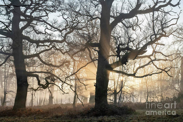 Wall Art - Photograph - Winter Oaks Mist And Sun by Tim Gainey