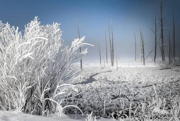 Wall Art - Photograph - Winter Of Wonderland by Karen Wiles