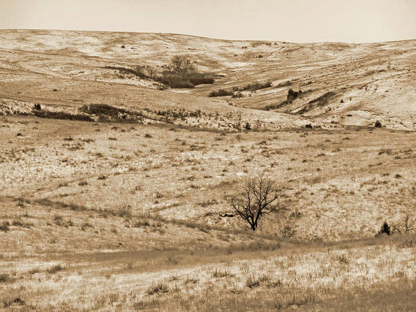 Photograph - Winter On The Western Edge by Cris Fulton