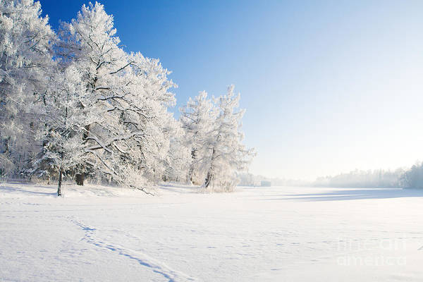Wall Art - Photograph - Winter Park In Snow by Ozerov Alexander